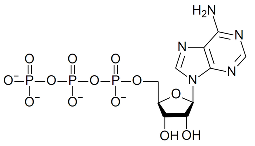 Structure of an ATP molecule. Source: WikiMedia Commons